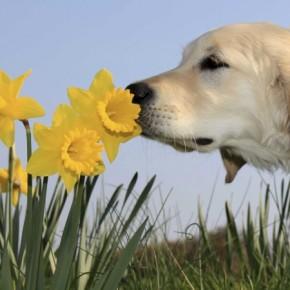 В «Полярисе» научат дружить с собаками